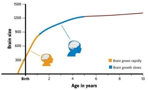 El rapido desarrollo del cerebro, bebés de 0 a 2 años